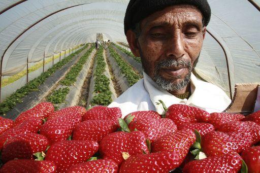 Gli immigrati pagano le pensioni dei nonni italiani…