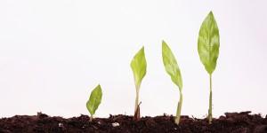 Crescita pensione